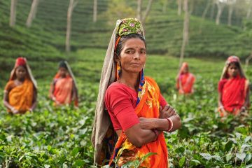 Your Virtual Cold-Chain Assistant will help Indian small-scale farmers access the cold chain.